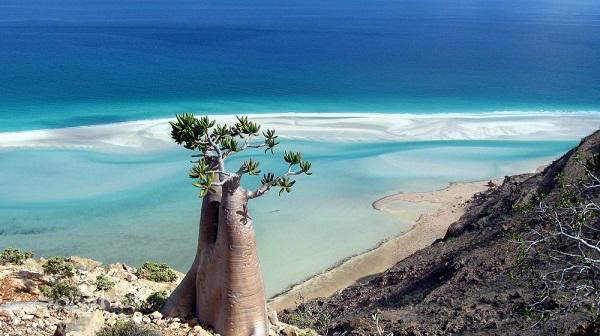 Jemen, Szokotra